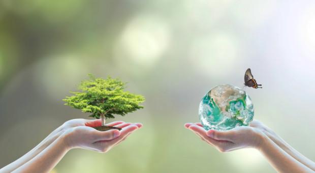Zwiększa się krajowa powierzchnia ekologicznych użytków rolnych