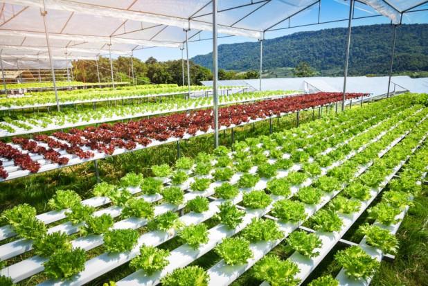 Ekspertka: Uprawy hydroponiczne, drony, inteligentne czujniki to przyszłość rolnictwa