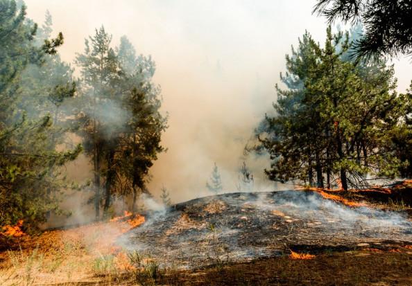 Duże pożary lasów w północnej i środkowej Portugalii; płoną też uprawy i łąki