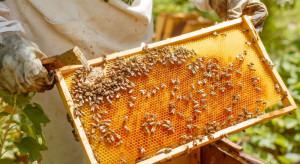 Współpraca rolnika i pszczelarza będzie nagrodzona w konkursie Pszczelarz Roku