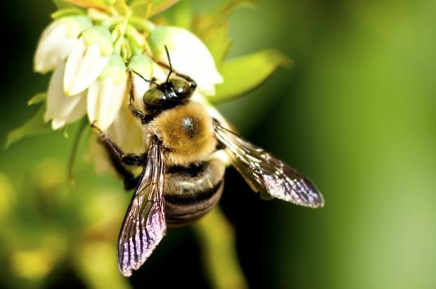 ARiMR: Zmiana warunków wsparcia dla rynku produktów pszczelich