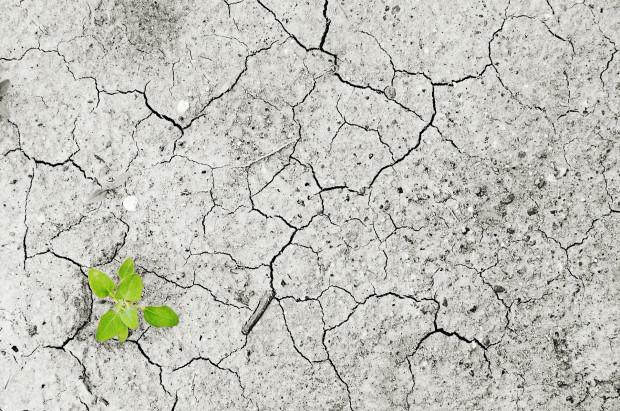 W których województwach występuje wciąż susza rolnicza? Raport IUNG
