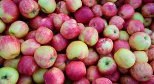 Polskie jabłka najdroższe na rynku unijnym