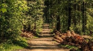 Susza i inwazja korników szkodzą niemieckim lasom