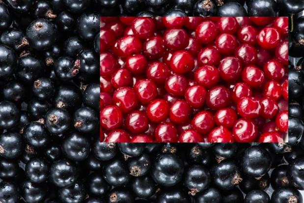 Korzystny sezon dla producentów czarnej porzeczki. Rynek wiśni pozostał niepewny