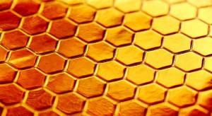 8 lipca obchodziliśmy Wielki Dzień Pszczół