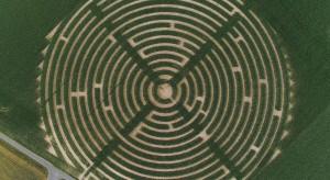 W powiecie lubańskim powstały ogromne labirynty kukurydziane