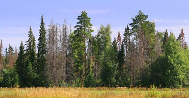 IBL: zagrożenie pożarowe we wszystkich polskich lasach