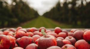 Praca w ogrodnictwie: Czy jest zainteresowanie jesiennymi zbiorami?