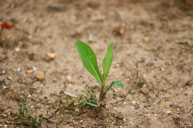 KOWR uruchomił geoserwis wspierający monitoring suszy rolniczej