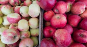 Coraz większa podaż letnich odmian jabłek - jakie ceny na rynku Bronisze?