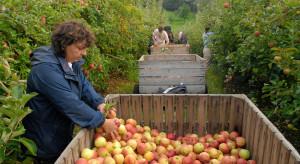 Analitycy: Rośnie zapotrzebowanie na pracowników sezonowych w rolnictwie