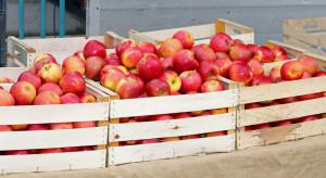 Letnie odmiany jabłek na rynkach hurtowych - jakie są ceny?