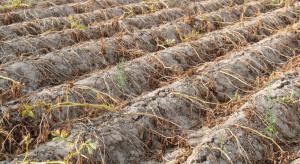 IUNG: susza utrzymuje się we wszystkich województwach w kraju