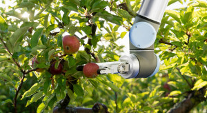 Wielka Brytania: Brak pracowników przyspiesza wykorzystywanie robotów przy zbiorach
