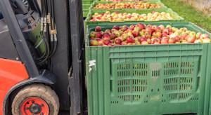 Stabilne ceny przemysłu, rośnie zapotrzebowanie i ceny jabłek na soki
