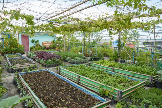 Montreal: Największa na świecie szklarnia na dachu zaopatruje miasto w warzywa