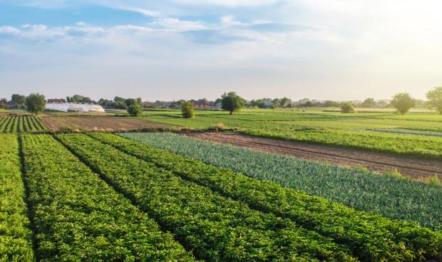 Województwo opolskie liczy najmniej gospodarstw ekologicznych w kraju