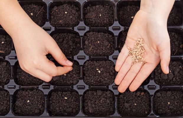 Bejo kończy prace nad nową powłoką dla nasion ekologicznych