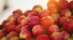 Zwiększa się dostępność jabłek na rynkach hurtowych – jak kształtują się ceny?