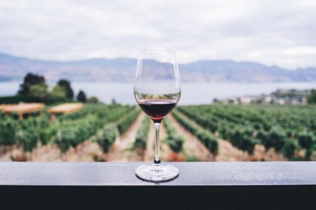 Rośnie popularność polskich winnic i win owocowych