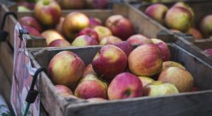 Jabłka 2020 – jak kształtują się ceny i dostępność odmian na rynkach hurtowych?