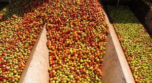 Ceny jabłek przemysłowych spadły do poziomu 45 gr/kg