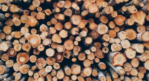 UOKiK wszczął postępowania przeciwko firmom zajmującym się gospodarką leśną