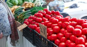 Bronisze: Mniejsza podaż bakłażanów i pomidorów gruntowych. Niskie ceny białej kapusty