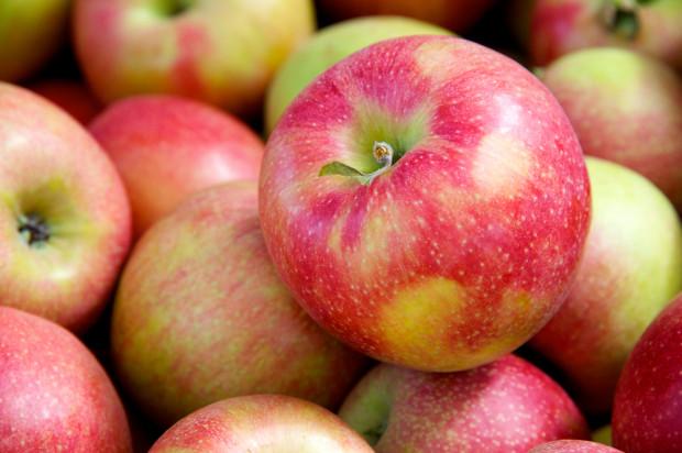 Zbiory 2020: Krótsze szypułki - częsty problem przy tegorocznych zbiorach jabłek