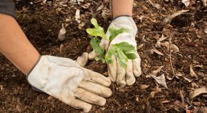 Para prezydencka zachęca do sadzenia drzew i sprzątania lasów