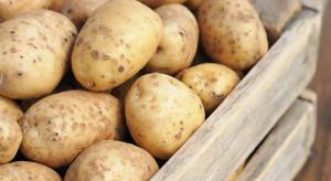 Ukraina rozważa wprowadzenie zakazu importu ziemniaków z Rosji