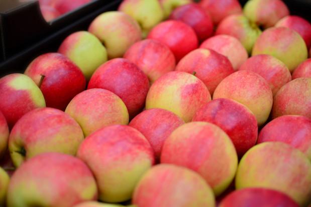 Związek Sadowników RP organizuje pikietę w związku z obniżką cen  jabłek deserowych