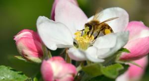 Adoptuj pszczołę (i motyla) – ruszyła ósma edycja akcji Greenpeace