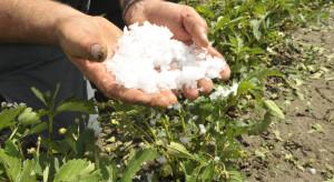 KRIR: Wsparcie inwestycji w odtwarzajanie potencjału produkcji rolnej - bez zmian