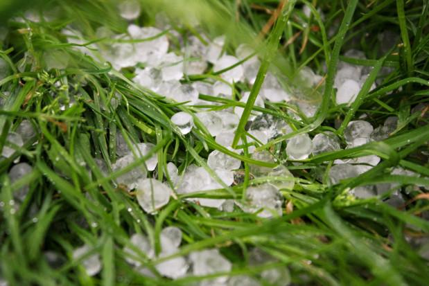 Pogoda dla sadowników: nadchodzą gradobicia i burze