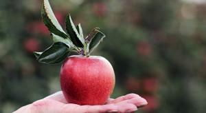 Od dziś obchody Światowego Dnia Jabłka