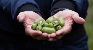 MINI KIWI - naturalne wzmocnienie odporność w okresie jesiennym