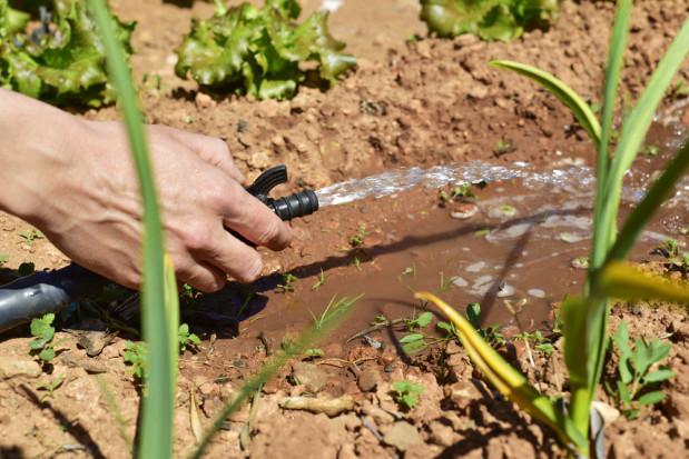 """Program """"Moja Woda"""" także dla sadowników, trwa nabór wniosków"""