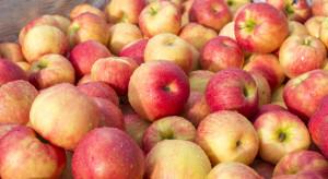 Lubelska Izba Rolnicza o  spadku cen jabłek: To zmowa cenowa!