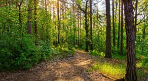 Naukowcy: Roślinna różnorodność jest kluczowa dla utrzymania prawidłowych cykli obiegu wody