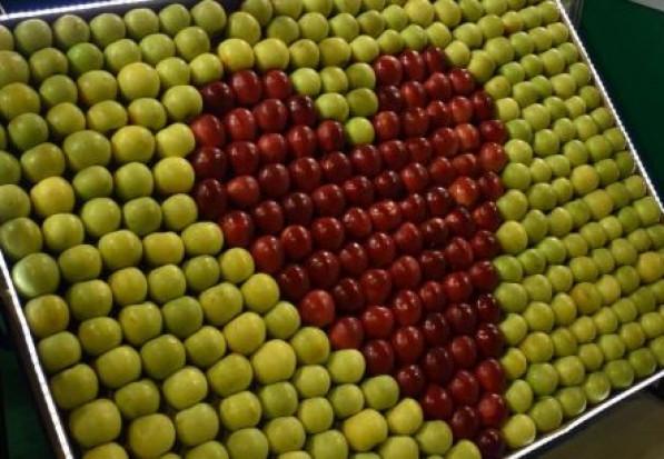 Dziś jest Światowy Dzień Jabłka