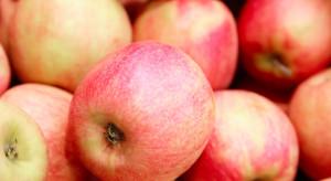 Raport UE: W minionym sezonie ceny jabłek powyżej normalnego poziomu