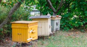 Powiat biłgorajski: Złodzieje ukradli 9 uli wraz z pszczołami
