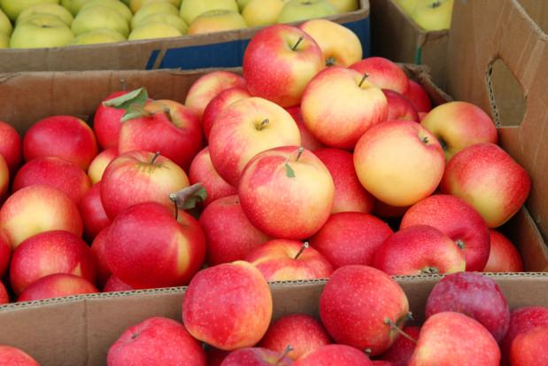 Rynki hurtowe: Ceny jabłek znów spadły (analiza)