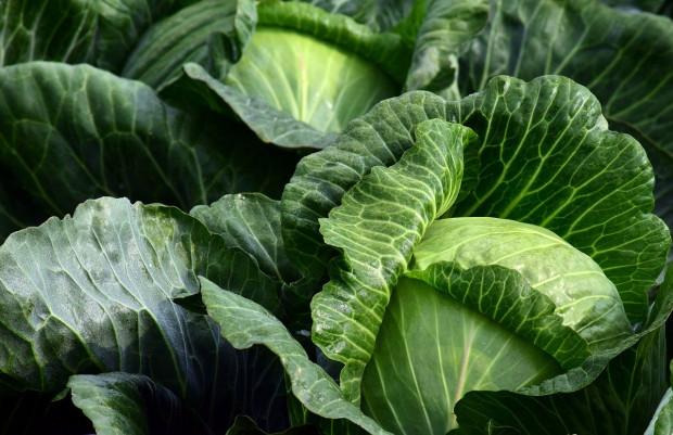 GUS: Produkcja warzyw gruntowych wyniesie blisko 4,0 mln ton