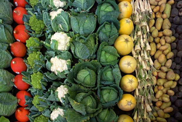 GUS: tegoroczne zbiory płodów rolnych wyższe niż w przed rokiem