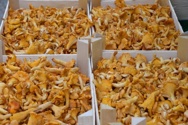 Fracht FWO dostarcza do Stanów Zjednoczonych kilka ton świeżych kurek