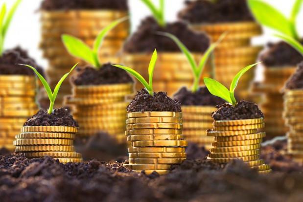 MRiRW: projektowane stawki płatności bezpośrednich za 2020 r.