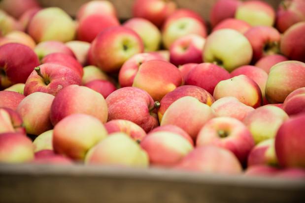 Sadownicy: Ceny owoców gwałtownie spadły, a koszty produkcji nadal się utrzymują